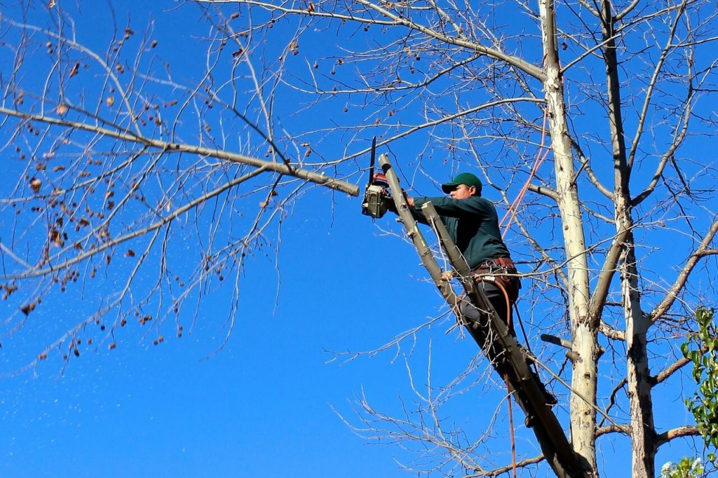 Contact Us-Gibsonton FL Tree Trimming and Stump Grinding Services-We Offer Tree Trimming Services, Tree Removal, Tree Pruning, Tree Cutting, Residential and Commercial Tree Trimming Services, Storm Damage, Emergency Tree Removal, Land Clearing, Tree Companies, Tree Care Service, Stump Grinding, and we're the Best Tree Trimming Company Near You Guaranteed!