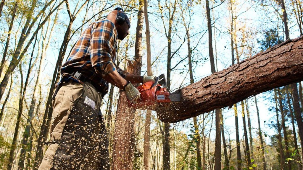 Gibsonton FL Tree Trimming and Stump Grinding Services Home Page Image-We Offer Tree Trimming Services, Tree Removal, Tree Pruning, Tree Cutting, Residential and Commercial Tree Trimming Services, Storm Damage, Emergency Tree Removal, Land Clearing, Tree Companies, Tree Care Service, Stump Grinding, and we're the Best Tree Trimming Company Near You Guaranteed!