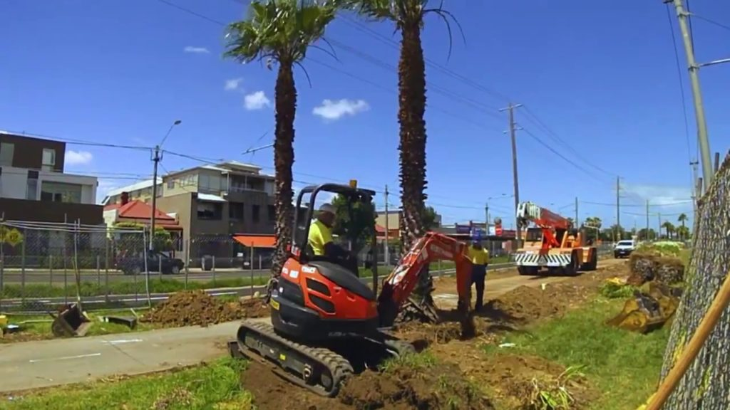 Palm Tree Removal-Gibsonton FL Tree Trimming and Stump Grinding Services-We Offer Tree Trimming Services, Tree Removal, Tree Pruning, Tree Cutting, Residential and Commercial Tree Trimming Services, Storm Damage, Emergency Tree Removal, Land Clearing, Tree Companies, Tree Care Service, Stump Grinding, and we're the Best Tree Trimming Company Near You Guaranteed!