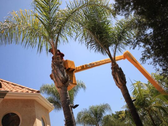 Palm Tree Trimming-Gibsonton FL Tree Trimming and Stump Grinding Services-We Offer Tree Trimming Services, Tree Removal, Tree Pruning, Tree Cutting, Residential and Commercial Tree Trimming Services, Storm Damage, Emergency Tree Removal, Land Clearing, Tree Companies, Tree Care Service, Stump Grinding, and we're the Best Tree Trimming Company Near You Guaranteed!