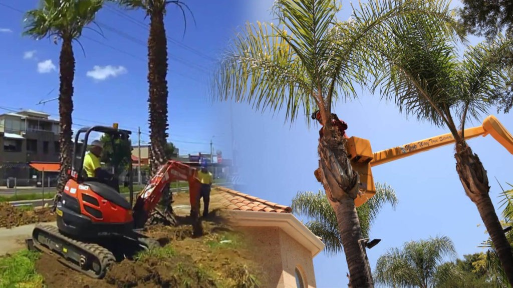 Palm tree trimming & palm tree removal-Gibsonton FL Tree Trimming and Stump Grinding Services-We Offer Tree Trimming Services, Tree Removal, Tree Pruning, Tree Cutting, Residential and Commercial Tree Trimming Services, Storm Damage, Emergency Tree Removal, Land Clearing, Tree Companies, Tree Care Service, Stump Grinding, and we're the Best Tree Trimming Company Near You Guaranteed!
