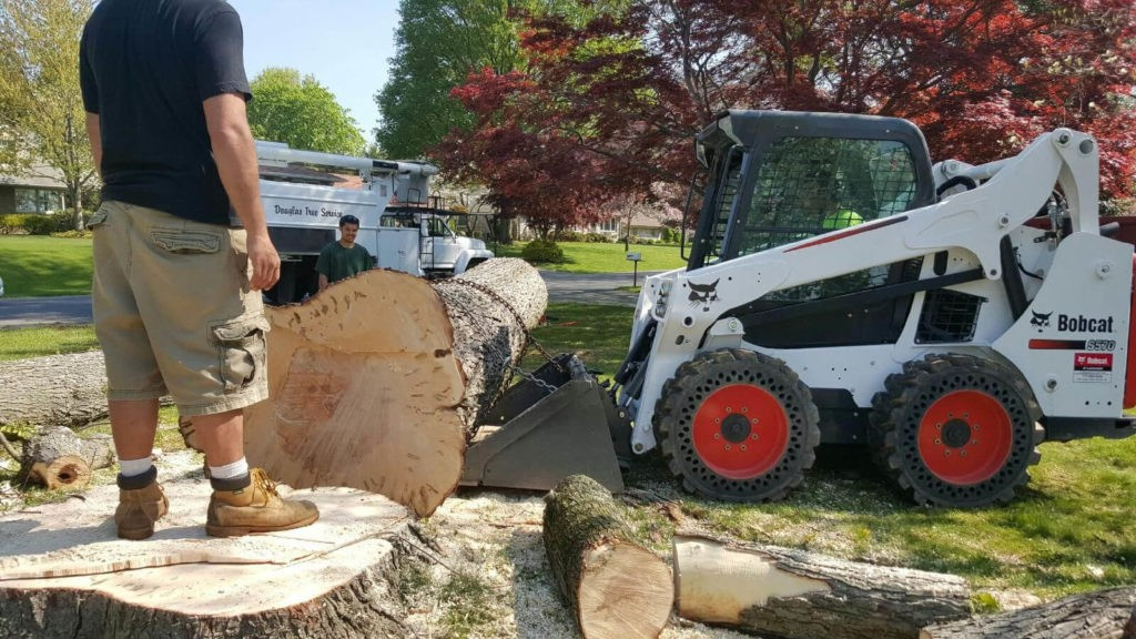 Services-Gibsonton FL Tree Trimming and Stump Grinding Services-We Offer Tree Trimming Services, Tree Removal, Tree Pruning, Tree Cutting, Residential and Commercial Tree Trimming Services, Storm Damage, Emergency Tree Removal, Land Clearing, Tree Companies, Tree Care Service, Stump Grinding, and we're the Best Tree Trimming Company Near You Guaranteed!