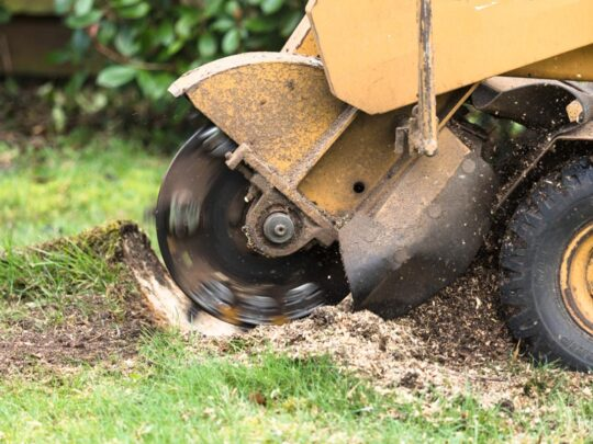 Stump Grinding-Gibsonton FL Tree Trimming and Stump Grinding Services-We Offer Tree Trimming Services, Tree Removal, Tree Pruning, Tree Cutting, Residential and Commercial Tree Trimming Services, Storm Damage, Emergency Tree Removal, Land Clearing, Tree Companies, Tree Care Service, Stump Grinding, and we're the Best Tree Trimming Company Near You Guaranteed!