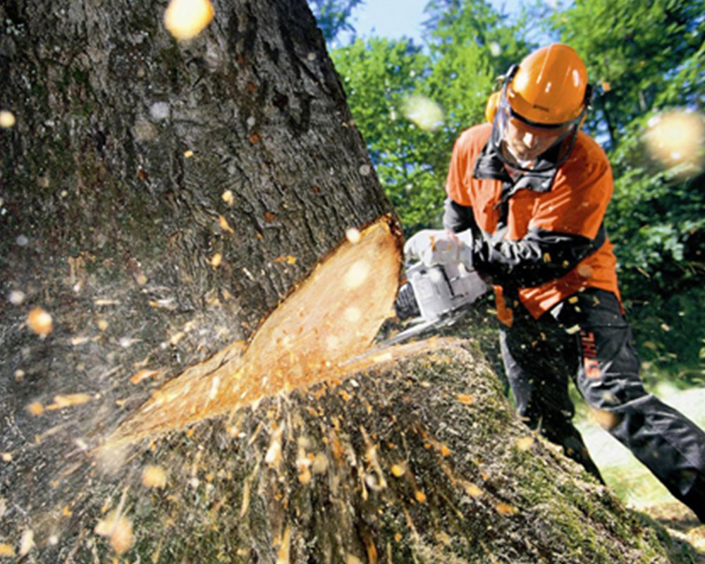 Tree Cutting-Gibsonton FL Tree Trimming and Stump Grinding Services-We Offer Tree Trimming Services, Tree Removal, Tree Pruning, Tree Cutting, Residential and Commercial Tree Trimming Services, Storm Damage, Emergency Tree Removal, Land Clearing, Tree Companies, Tree Care Service, Stump Grinding, and we're the Best Tree Trimming Company Near You Guaranteed!