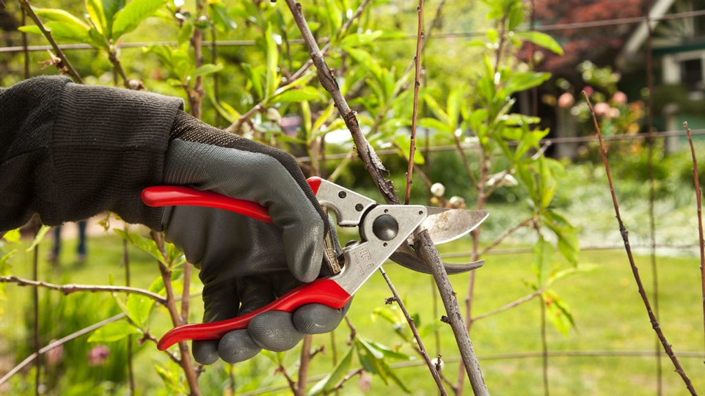 Tree Pruning-Gibsonton FL Tree Trimming and Stump Grinding Services-We Offer Tree Trimming Services, Tree Removal, Tree Pruning, Tree Cutting, Residential and Commercial Tree Trimming Services, Storm Damage, Emergency Tree Removal, Land Clearing, Tree Companies, Tree Care Service, Stump Grinding, and we're the Best Tree Trimming Company Near You Guaranteed!
