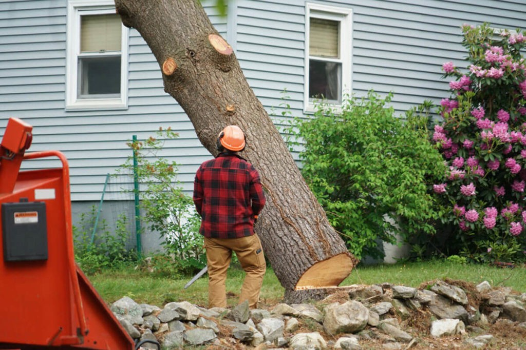 Tree Removal-Gibsonton FL Tree Trimming and Stump Grinding Services-We Offer Tree Trimming Services, Tree Removal, Tree Pruning, Tree Cutting, Residential and Commercial Tree Trimming Services, Storm Damage, Emergency Tree Removal, Land Clearing, Tree Companies, Tree Care Service, Stump Grinding, and we're the Best Tree Trimming Company Near You Guaranteed!