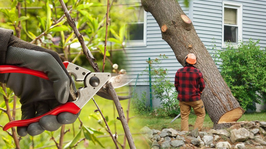 Tree pruning & tree removal-Gibsonton FL Tree Trimming and Stump Grinding Services-We Offer Tree Trimming Services, Tree Removal, Tree Pruning, Tree Cutting, Residential and Commercial Tree Trimming Services, Storm Damage, Emergency Tree Removal, Land Clearing, Tree Companies, Tree Care Service, Stump Grinding, and we're the Best Tree Trimming Company Near You Guaranteed!